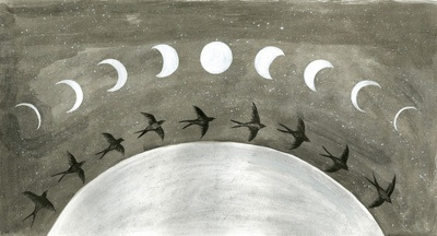 moon cycle birds