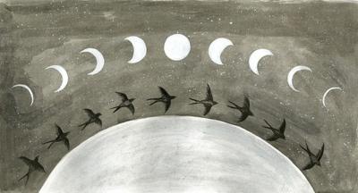 moon cycle birds